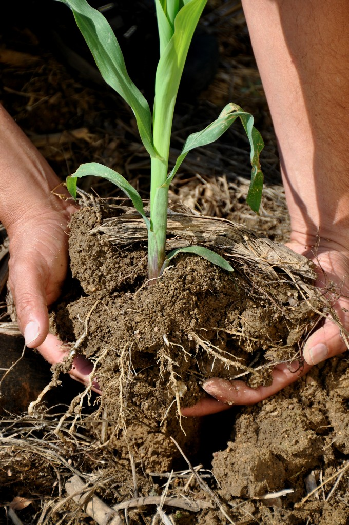Flickr | Natural Resources Conservation Service Soil Health Campaign